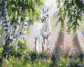 Картина по номерам 40Х50 Белый конь.