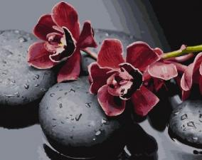 Картина по номерам 40Х50 Ветка орхидеи на камнях.